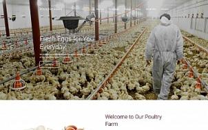 Poultry Farm Web Design - PoultryFarm - tablet image